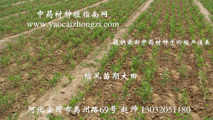 植物苗期矢量图