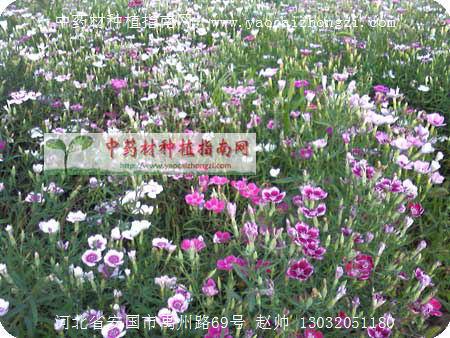 中草药 - 仁和山庄 - 自然的怀抱,梦想的家园