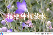 桔梗种植技术视频