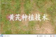 黄芪种植技术视频