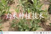 白术种植技术视频